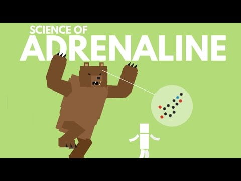 The Science of Adrenaline