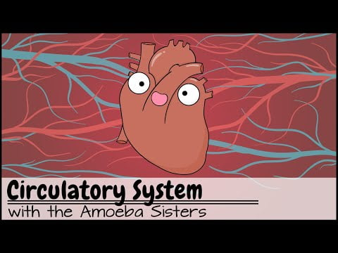 Circulatory System and Pathway of Blood Through the Heart
