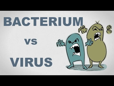 Viruses and Bacteria: What's the difference and who cares anyway? – Plain and Simple