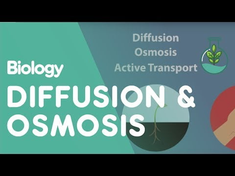 Transport in Cells: Diffusion and Osmosis   Cells   Biology   FuseSchool