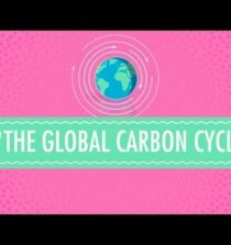 The Global Carbon Cycle: Crash Course Chemistry #46
