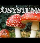 Understanding Ecosystems for Kids: Producers, Consumers, Decomposers – FreeSchool