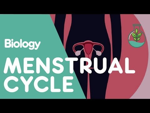What Is The Menstrual Cycle? | Physiology | Biology | FuseSchool