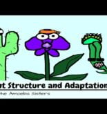 Plant Structure and Adaptations