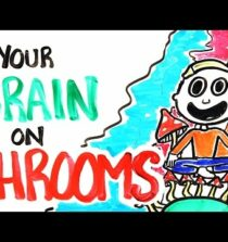 Your Brain On Shrooms