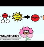 Photosynthesis and the Teeny Tiny Pigment Pancakes