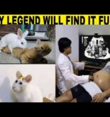 Only Legends Will Find It Funny😂#237 |funny memes| legend memes