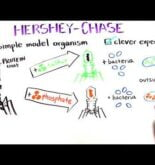 The Hershey and Chase Experiment | Discovery of DNA as the genetic material