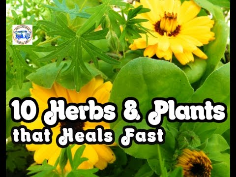 10 HERBS & PLANTS THAT HEALS FAST –  HEALTH GUIDE WHEN TRAVELLING PHILIPPINES|FULL HD
