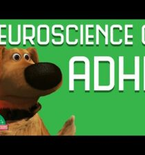 Neuroscience of ADHD