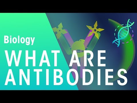 What are Antibodies | Health | Biology | FuseSchool