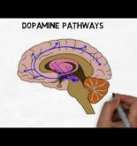 2-Minute Neuroscience: Dopamine