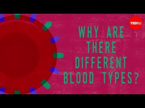 Why do blood types matter? – Natalie S. Hodge