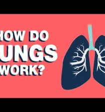 How do lungs work? – Emma Bryce