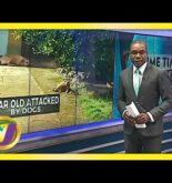 5 Year Old Attacked by Dogs | TVJ Sports News