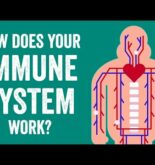 How does your immune system work? – Emma Bryce