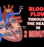Blood Flow through the Heart in 2 MINUTES