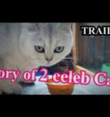 TRAILER: Story of 2 Celebrity Cats by Roger Wu 胡慧冲, a Thailand based Hong Kong Travel Influencer.