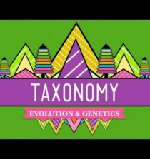 Taxonomy: Life's Filing System – Crash Course Biology #19
