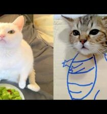 BEST CAT MEMES COMPILATION OF 2020 – 2021 PART 59 (FUNNY CATS)