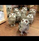 Owl – A Funny Owls And Cute Owls Compilation    NEW