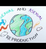 Types of Reproduction: Sexual versus Asexual Reproduction – iBiology & Youreka Science