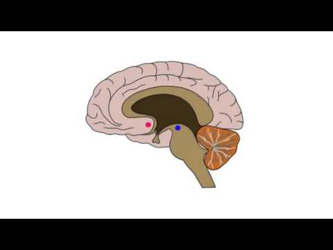 2-Minute Neuroscience: Effects of Cocaine
