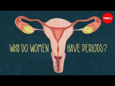 Why do women have periods?