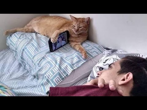 memes that i watch with my cat