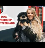 SWITZERLAND | Travelling with a dog | How To + Tips