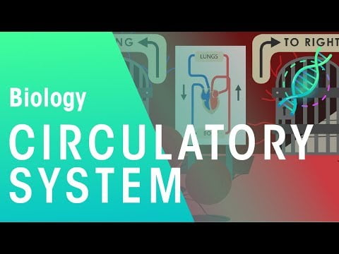 Intro to the Circulatory System   Biology   Physiology   FuseSchool