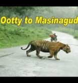 Ooty to Masinagudi Driving with Car | Best Forest Rout