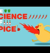 The science of spiciness – Rose Eveleth
